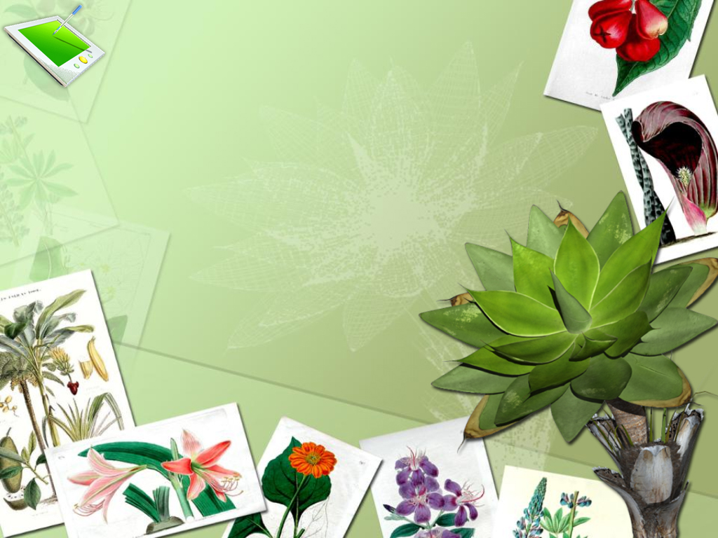 Animation Botany Flowers PPT templates
