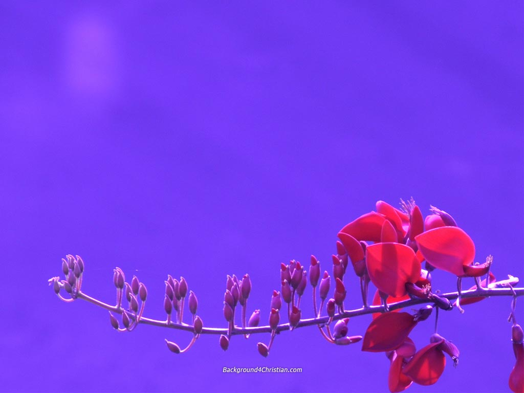 Beautiful Night Red Flower PPT Backgrounds