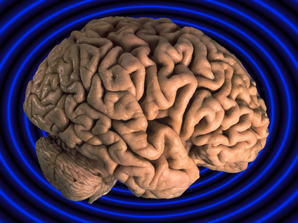 Brain Organ PPT Backgrounds