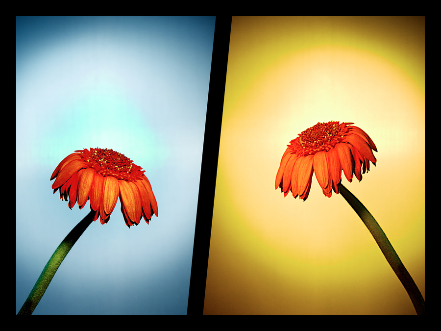 Flowers in Decay PPT Backgrounds