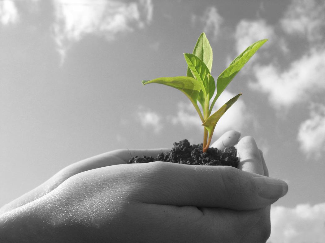 Growth Management