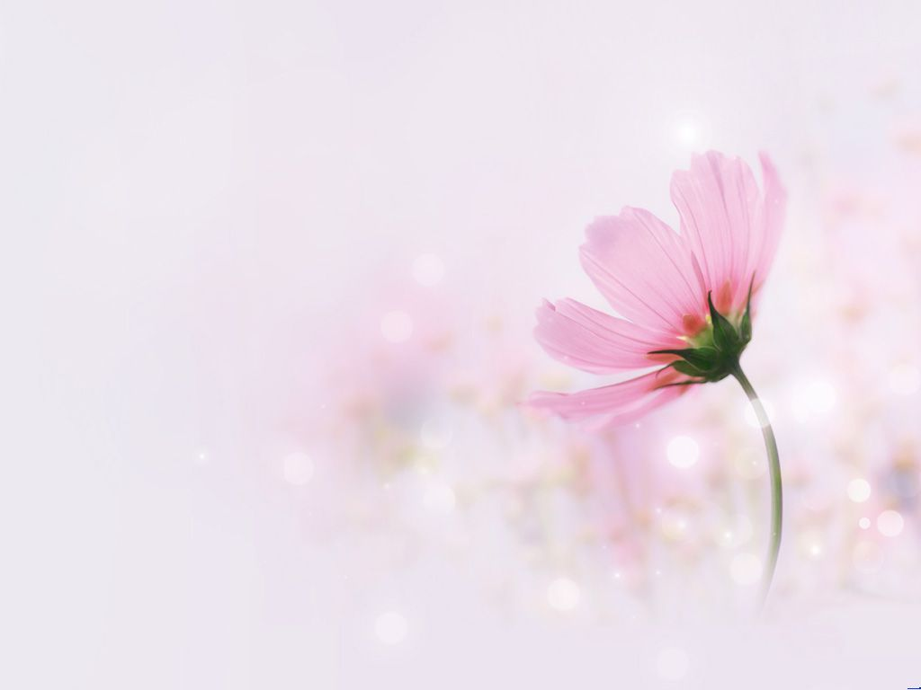 Pink elegant flowers PPT Backgrounds