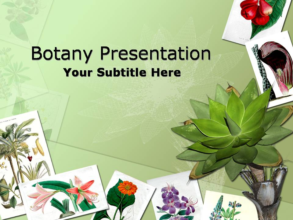botany nature flower templates for powerpoint presentations, Modern powerpoint