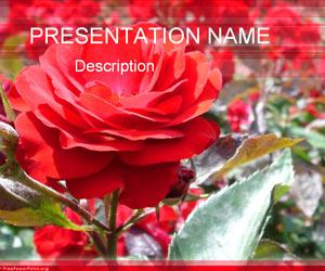 The Rose Garden PPT templates