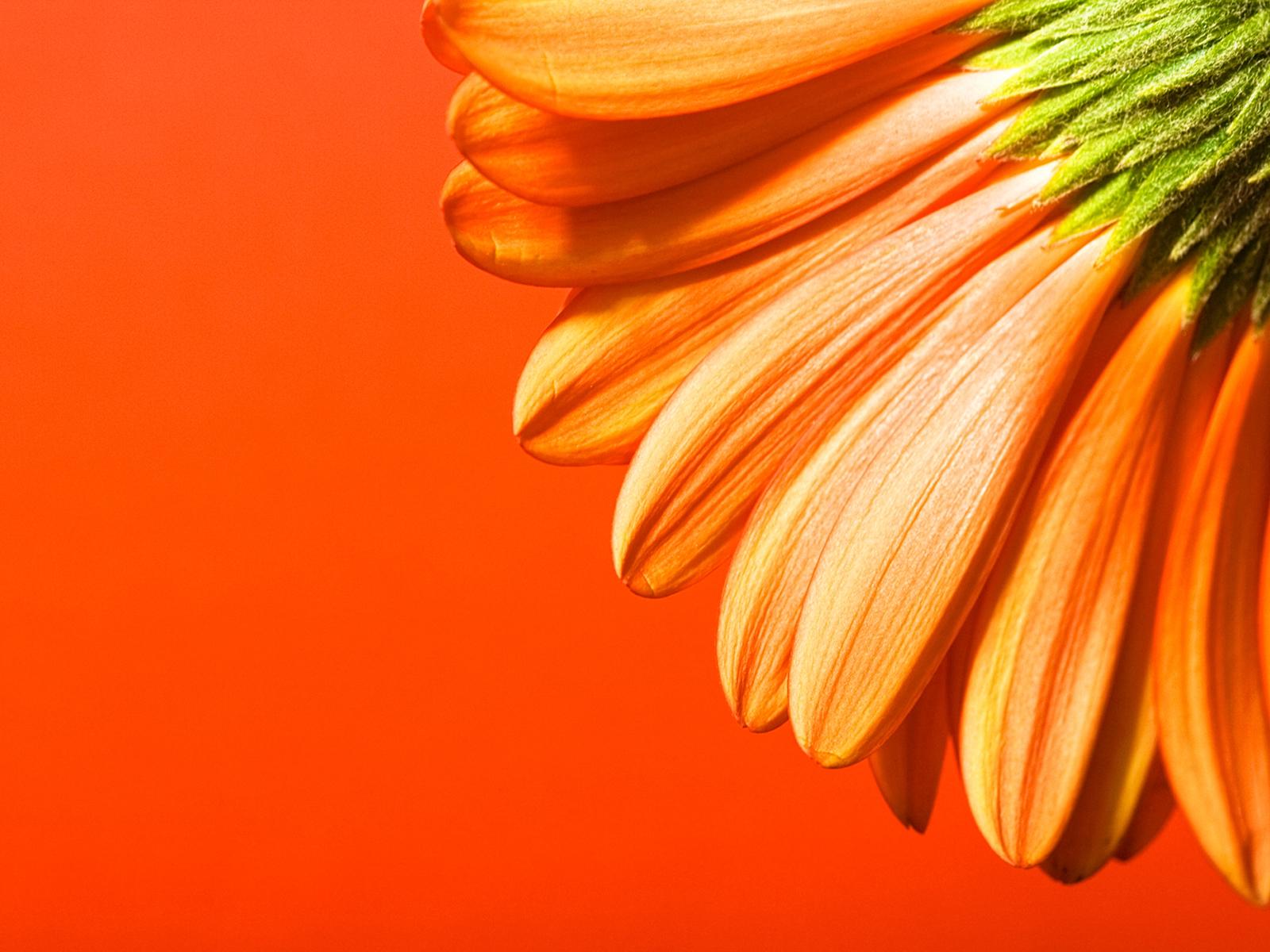 Orange beautiful flowers PPT Backgrounds