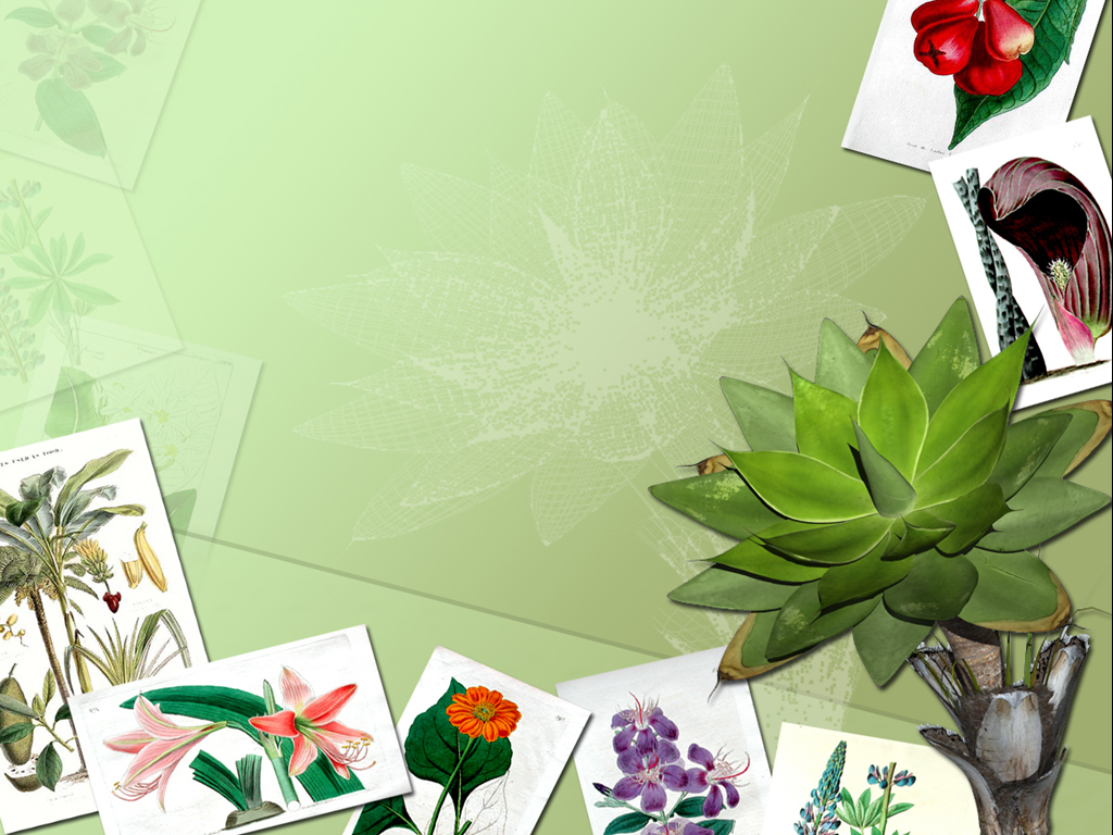 Botany Frames PPT templates